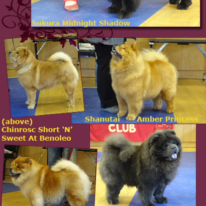 National Chow Chow Club